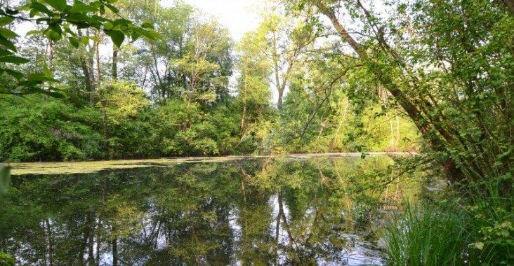 Der Althe rhein in wunderschön idyllischer Waldumgebung.