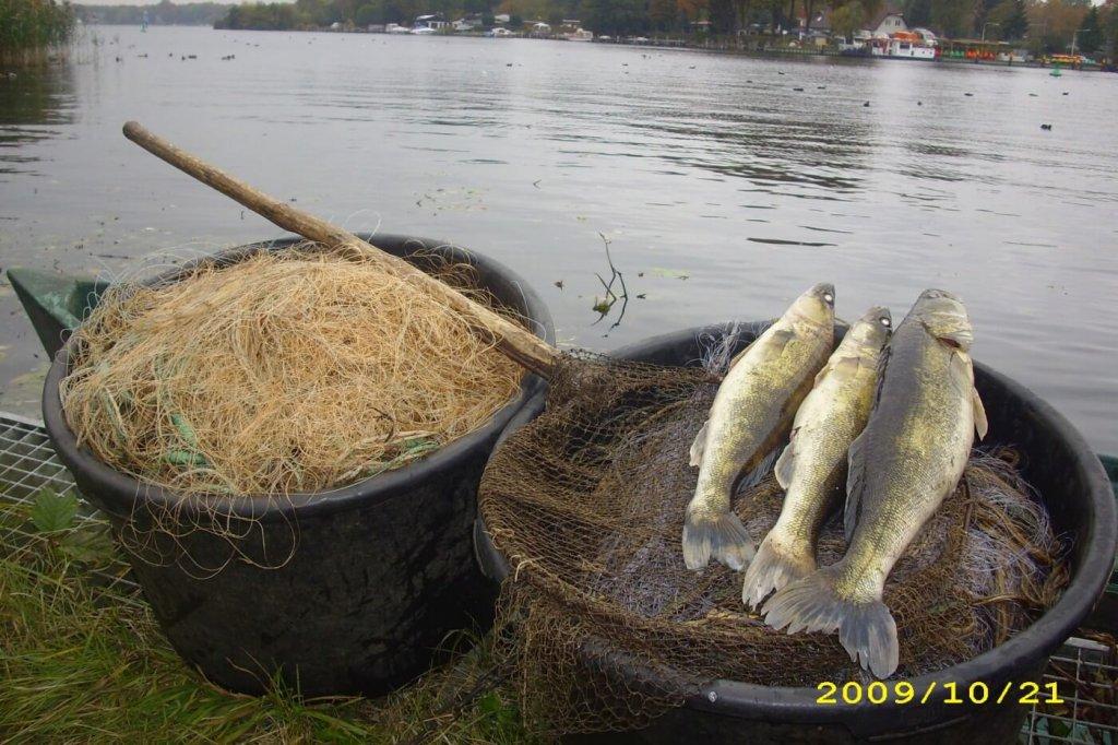 Im Gewässerbereich der Fischerei Löcknitz angeln – Tipps bei