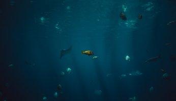Ein Fischschwarm im Wasser bei trübem licht.