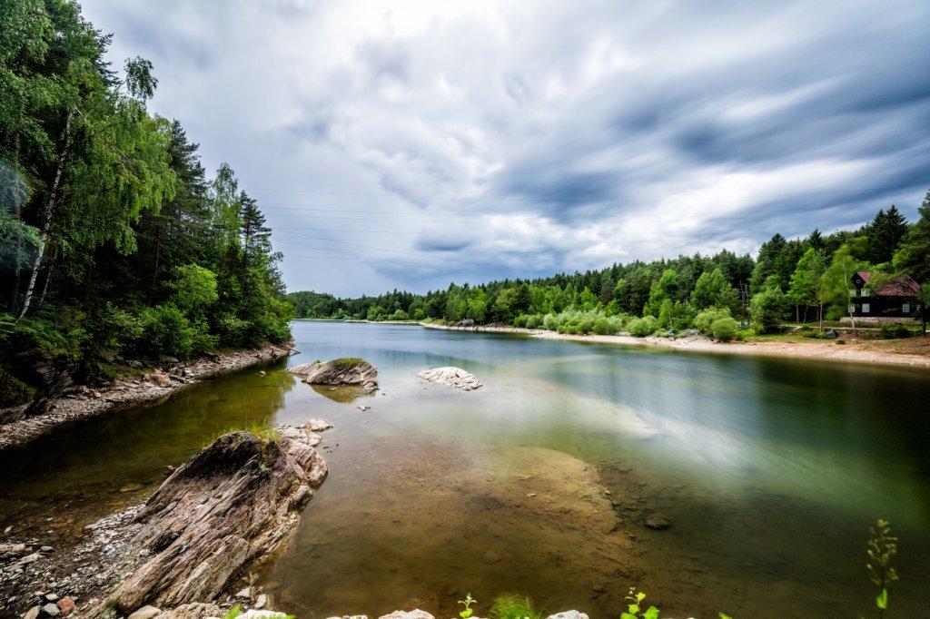 Grüner Wald am Ufer des KELAG Forstsees
