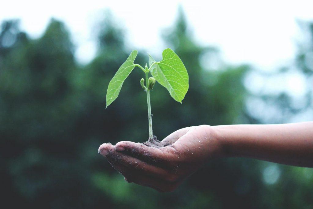 Nachhaltiges Reisen schont die Umwelt