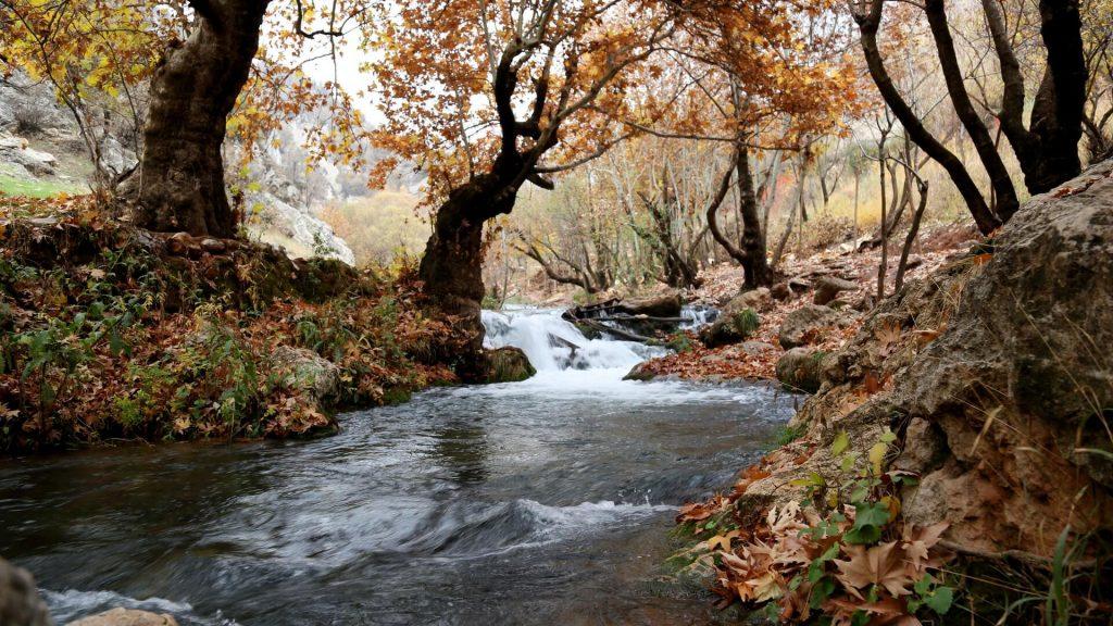 Bach mit Stromschnelle im Herbst - perfektes Gewässer zum Angeln auf Bachforellen