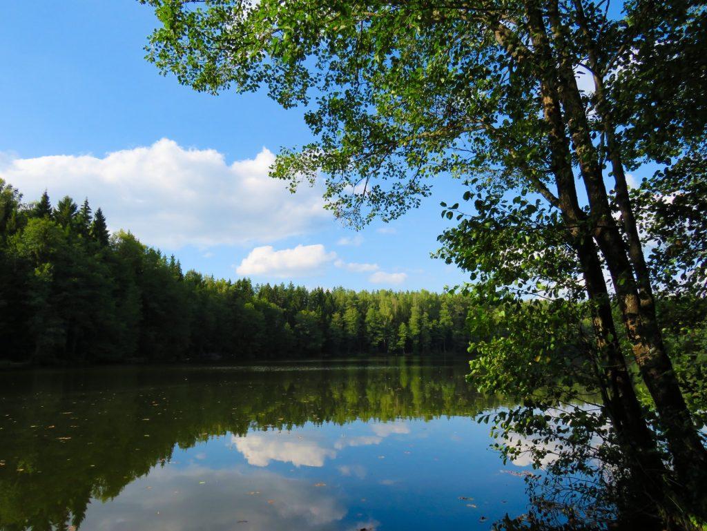 Bewaldeter See im Sommer