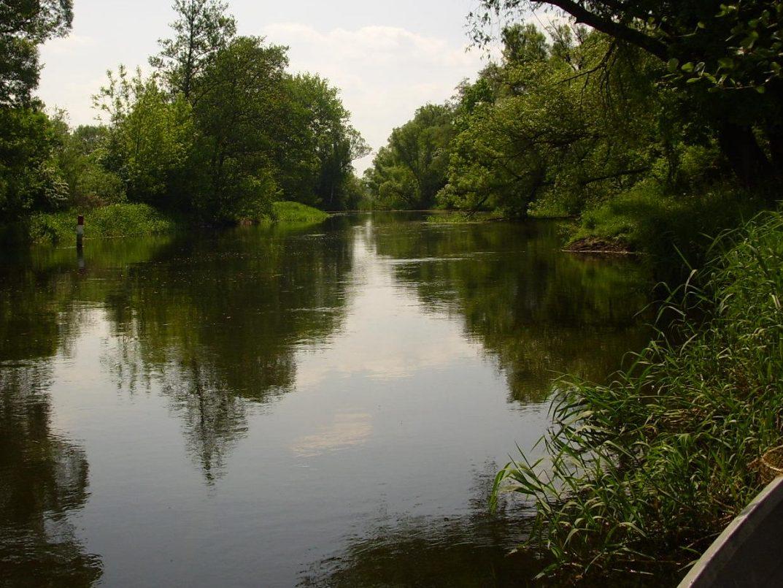 Bild vom Ufer der Gewässerbereiche der Fischerei Löcknitz