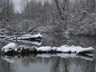 verschneite flusslandschaft mit Bäumen