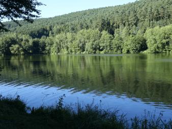 Marbachsee mit Wald an einem schönen Tag.